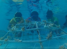 珊瑚再生活動をシュノーケリングで視察